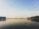 Pearls.Web by Robert-Paul Jansen