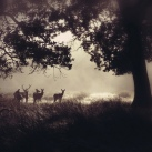 Dear deer by auketts