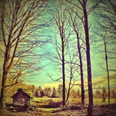 Tiny House by Lea Zimany